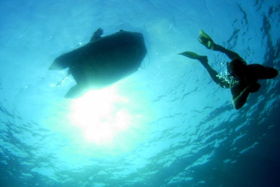 04  Apnoe Freediving - Schwimmen Tauchen Tirol