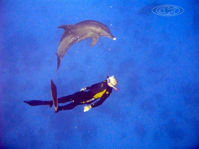 Delphine - Schwimmen Tauchen Tirol