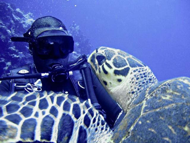 Schildkröte sagt Hallo - Schwimmen ErsteHilfe Tauchen Tirol